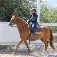 D Ranch Peruvian Horses logo