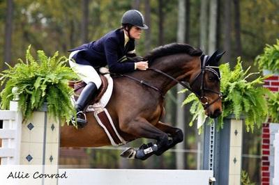 Baystreet Equestrian logo