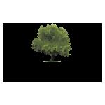 Santa Ynez Valley Tree Care logo