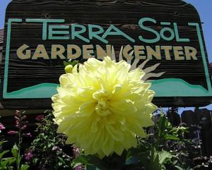 Photo uploaded by Terra Sol Garden Center