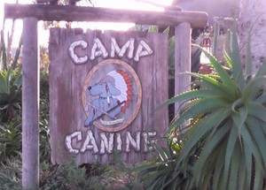 Photo uploaded by Camp Canine