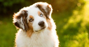 Photo uploaded by Rivers Edge Pet Lodge