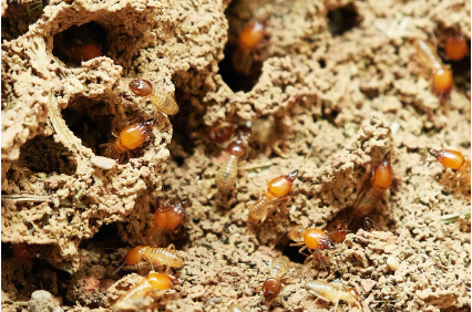 Photo uploaded by Ecola Termite & Pest Control