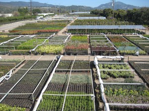 Photo uploaded by Foothill Nursery