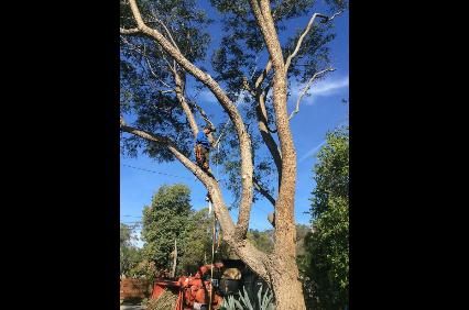 Photo uploaded by Beaver Tree Company The