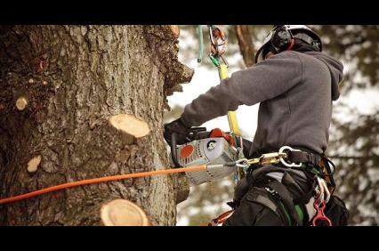 Photo uploaded by Economy Tree Service