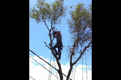 Photo uploaded by Aldo's Tree Service
