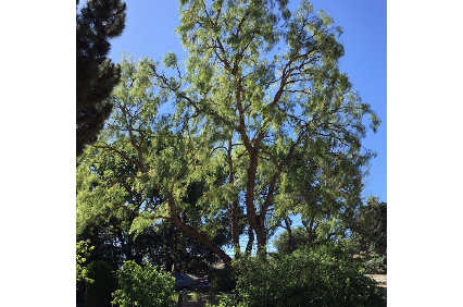 Photo uploaded by Antonio's Landscaping & Tree Service
