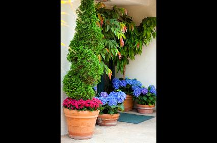 Photo uploaded by Village Gardener