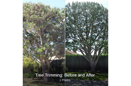 Photo uploaded by Central City Tree & Landscape Services