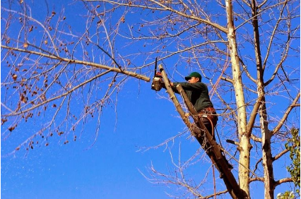 Photo uploaded by Santa Ynez Valley Tree Care