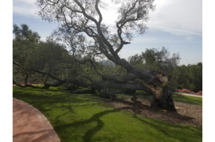 Photo uploaded by Peterson's Tree Care