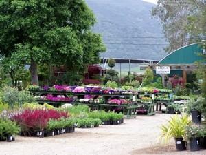 Photo uploaded by Windmill Nursery