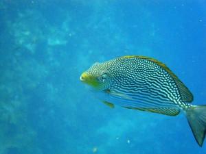Photo uploaded by Ocean Sports Scuba & Freediving