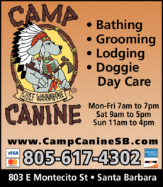 Yellow Pages Ad of Camp Canine