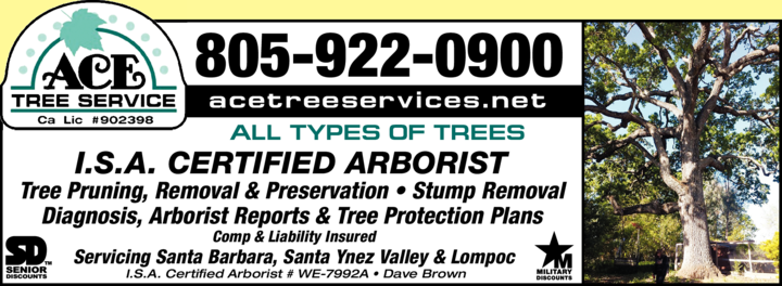 Yellow Pages Ad of Ace Tree Service