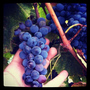 Photo uploaded by Sevtap Winery