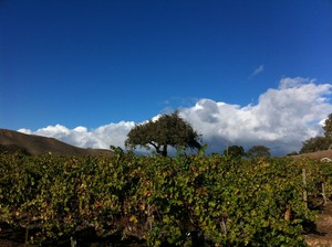 Photo uploaded by Stagecoach Wine Tours