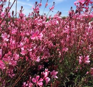 Photo uploaded by Central Coast Plant Company