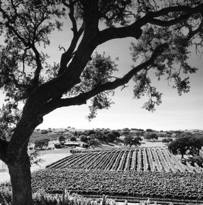 Photo uploaded by Stolpman Vineyards