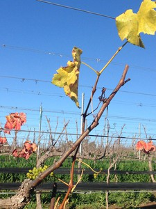 Photo uploaded by Martian Ranch & Vineyard