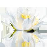 Davis Rick Dds logo