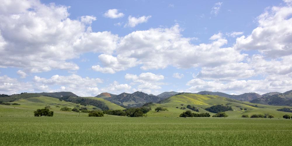 Green hills near Los Olivo, CA